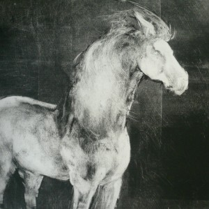 AoothecaryGalleryLondon Nine Lives Horse jpg